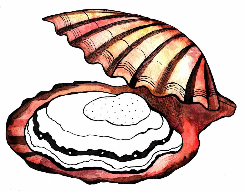 двустворчатые моллюски фото нарисовать резиновых