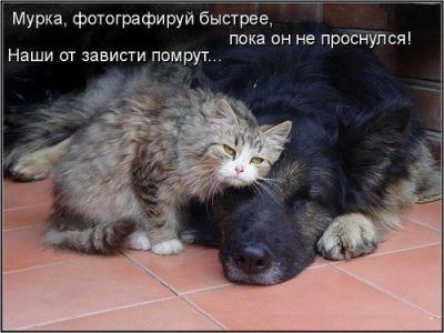 Веселые картинки  - img_29035886_1028_1.jpg