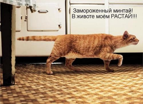 Веселые картинки  - img_29035886_1038_1.jpg