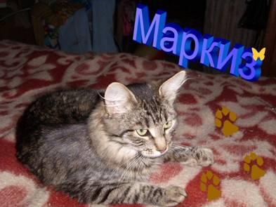 Кошки - очарование МОЁ - image001.jpg
