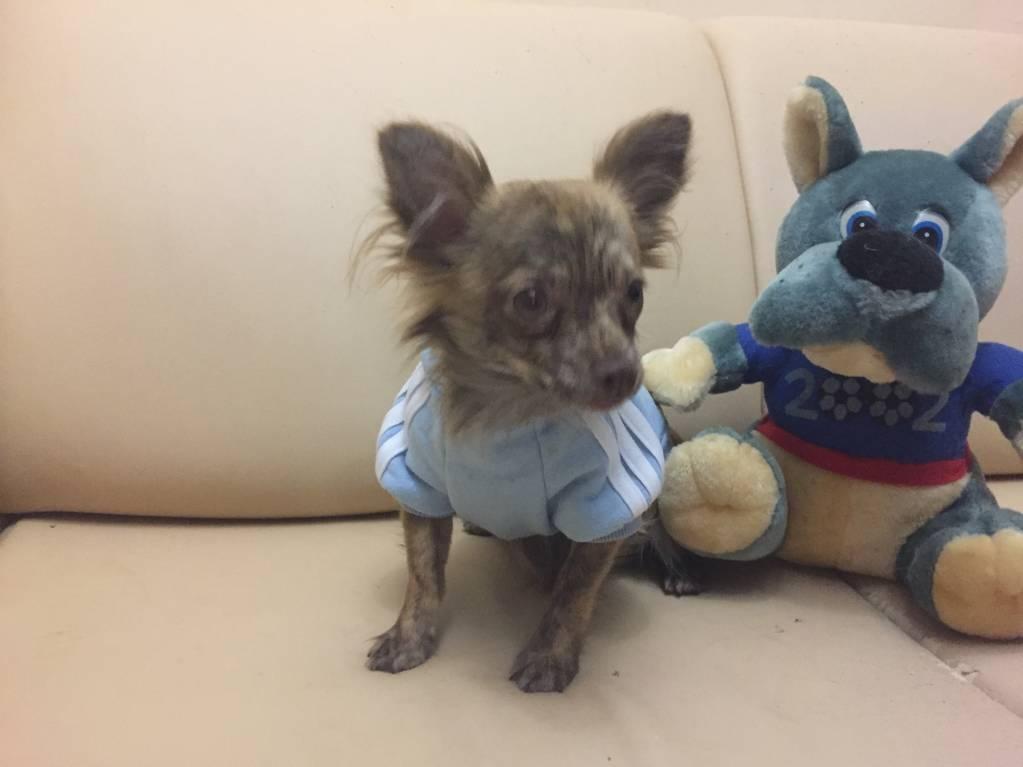 Наши верные друзья - собаки - IMG_0058.JPG