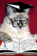 Аватар - a smart cat.jpg