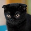 Аватар - =черн.кот.jpg