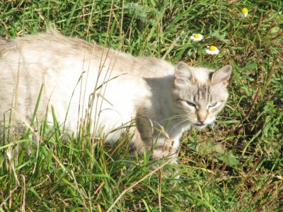 Кошки - очарование МОЁ - IMG_0376[1].jpg