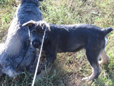 Наши верные друзья - собаки - IMG_0373[1].jpg