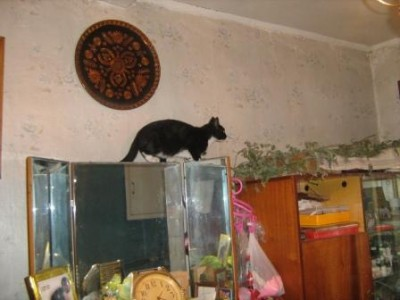 Кошки - очарование МОЁ - флешки 2696.jpg