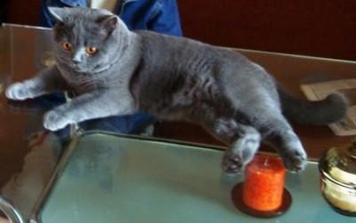 Кошки - очарование МОЁ - S8301055.JPG