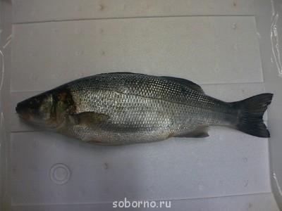 Рыбный день - image.jpg