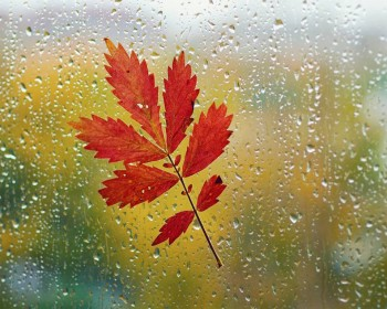 Назидательные истории и притчи - Red-Autumn-Leaf-1600x1280.jpg