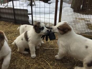 Наши верные друзья - собаки - IMG_2138.JPG