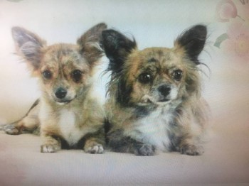 Наши верные друзья - собаки - IMG_2251.JPG