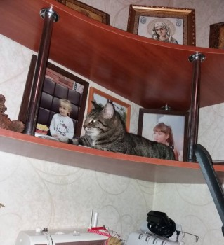 Кошки - очарование МОЁ - 20181103_134101.jpg