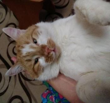 Кошки - очарование МОЁ - IMG_20181120_213434.jpg