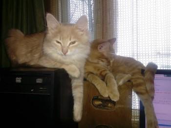 Мамочка с сыночком, Цыля и Персик. Любимое место, когда я сижу за компьютером. - IMG_20181213_101856.jpg