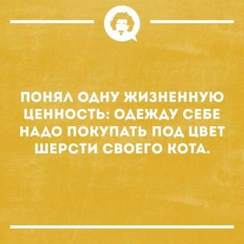 Кошки - очарование МОЁ - 51074253_1596478040455284_5794339953831837696_n.jpg