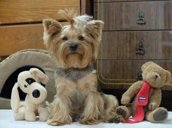 Наши верные друзья - собаки - 2 года.jpg