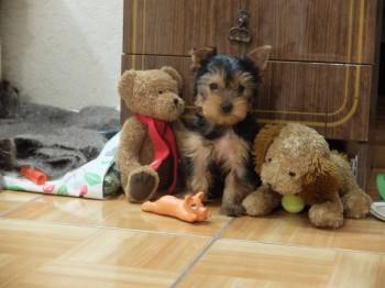 Наши верные друзья - собаки - 2016_1127_06421700(4).jpg